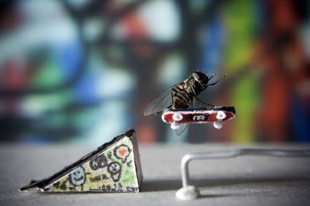 Fliege auf Skateboard - Minor Air von Nicholas Hendrickx
