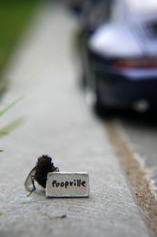 Fliege macht Autostopp - Makrofotografie mit Zubehör
