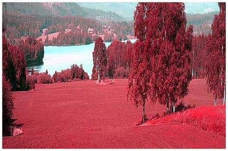 falschfarben infrarotfotografie rorslett