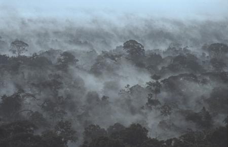 Regenwald Borneo Klima Wälder der Erde Umwelt Günter Ziesler