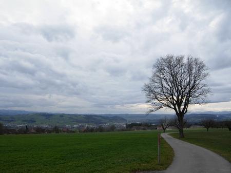 Baum Wolken Feld