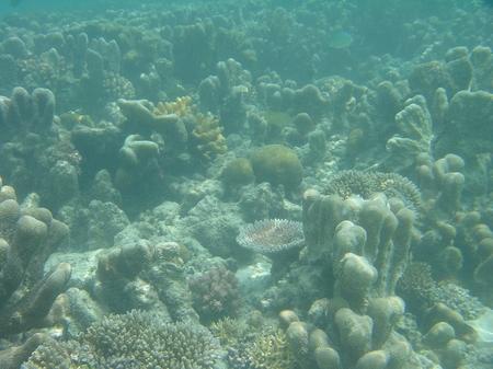 Unterwasseraufnahme Papua-Neuguinea original W.D.Roth