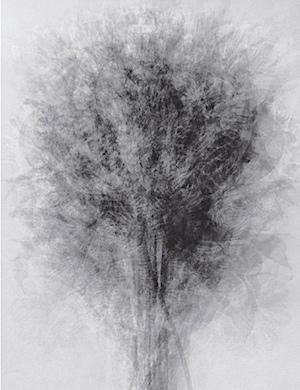 IdrisKhan-Blossfeldt.jpg