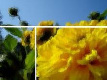 Dahlien oder Sonnenblumen. Goldener Schnitt