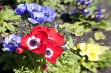 lensbaby testbilder Blumen