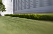 lensbaby testbilder hecke