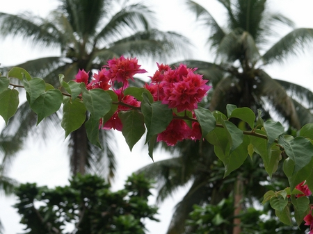 Normalbelichtung von Blüten W.D.Roth