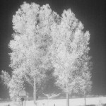 infrarot-850-nm-kontrastverstaerkt-sw-wdroth.jpg