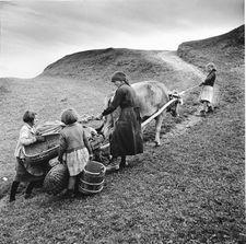Theo Frey: KARTOFFELFUHRE IN OBERSAXEN, PLATEGNA GR, 1948 (© Keystone / Fotostiftung Schweiz / Theo Frey)
