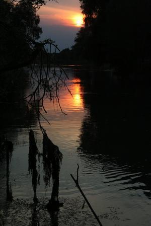 Thyl Sieber: Am Donaudelta