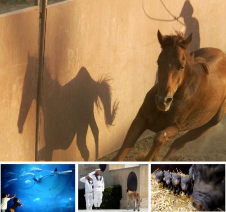 Tiere als Stars