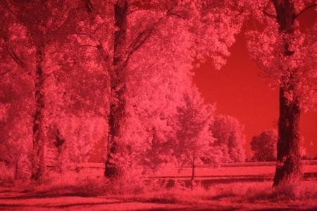 Canon 40D infrarot