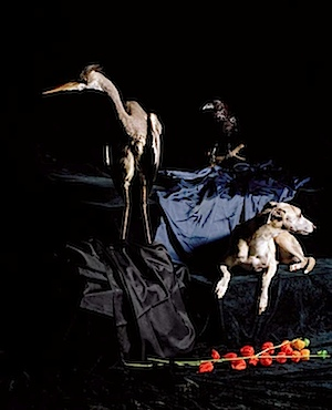 Nadin Maria Rüfenacht: Hund mit Reiher, 2006