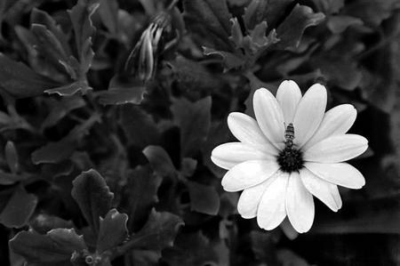 Nachbearbeitetes Blumenbild (Sebastian Müller)