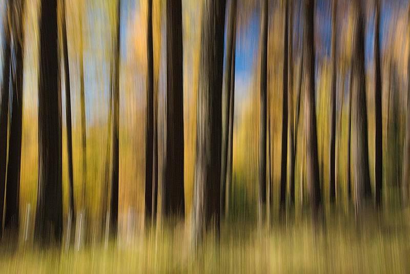 lodernderwald.jpg