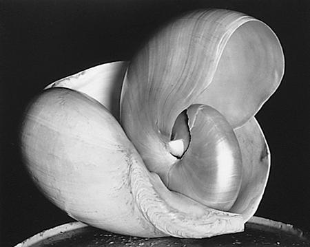 Edward Weston, Shells, 1927, (Bild: Norddeutscher Rundfunk / Center for Creative Photography, Arizona Board of Regents)