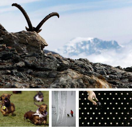 Engadin, Schweiz; Savannah, Georgia, USA; Oberstdorf, Deutschland; Kolarovo, Bulgarien. (Bilder Keystone)