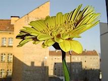Maria Sewcz – aus: schnitt-blume topf-pflanze, Berlin 2002–2004