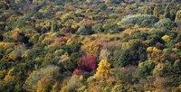 Bunt sind schon die Wälder: Aber dass der Tierpark in Berlin so bunt ist, wer hätte das gedacht? (Keystone / AP / Markus Schreiber)