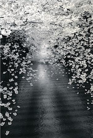 Masao Yamamoto: #1534 aus der Serie Kawa