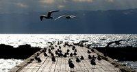Möwen versammeln sich am Seeufer von Ohrid in Mazedonien, wo Wirtschaftswissenschafter aus Südosteuropa über die Auswirkungen der Finanzkrise tagen. (Keystone / AP / Boris Grdanoski)