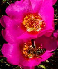 Blumenbild: Anderer Schnitt