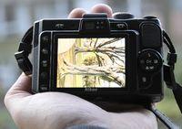 Der 2.7-Zoll-Bildschirm der Nikon P6000 ist brilliant. (© ps)