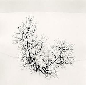 Michael Kenna: Ayako's Tree, Higashikura, Hokkaido, Japan, 2008