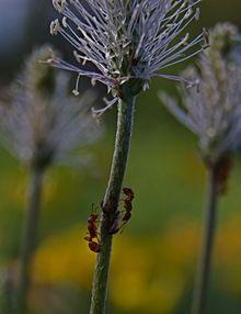 Die Ameisen, diesmal im Hochformat.
