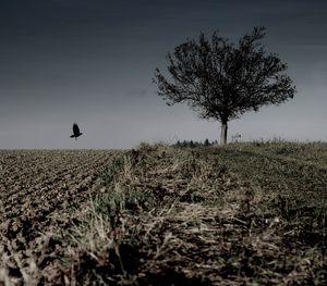 Die Krähe: Foto Noir
