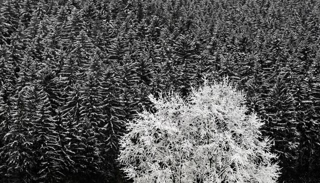 winterboehmen.jpg