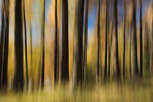 Bewegter Wald, © Dietmar Käppeli
