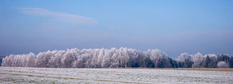 Alte Bäume mit weißen Haaren...