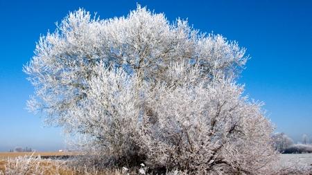 Bäume mit Puderzucker überzogen... (Bild: W.D.Roth)
