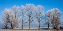Weiß-Blau - die Farben Bayerns (Bild: W.D.Roth)