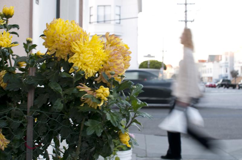 Offenblende-Beispiel: Blumen im Vordergrund