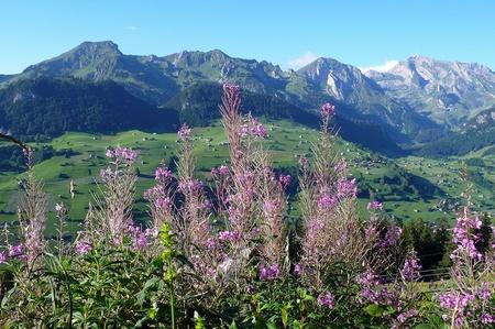 Feldblumen/Landschaft: Vorhang auf!