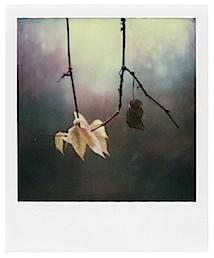 Arno Fischer - aus: Der Garten