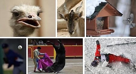Riyadh, Saudiarabien (2x); Freeport, Ill., USA; Mesa, AZ, USA; Medellin, Kolumbien; Moskau, Russland. Klick für Vollansicht (Bilder Keystone)