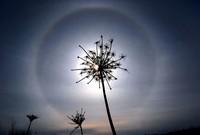 Hohe, dünne Eiswolken verursachen durch Brechung des Sonnenlichts einen Halo in Watertown, Wis. USA. (Keystone / AP Watertown Daily Times John Hart)