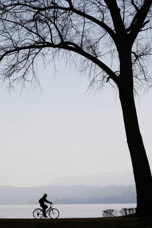 fahrradbaum.jpg