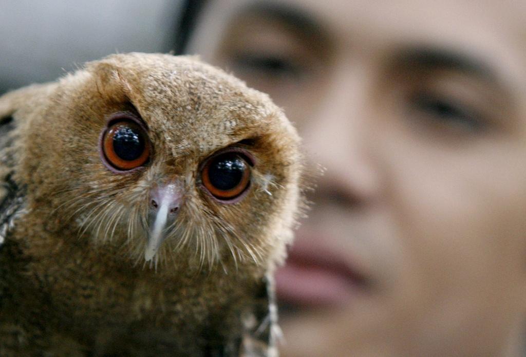 Eine Philippinen-Halsbandeule blickt vom Arm eines Tiermedizin-Studenten in die Kamera. (Keystone)