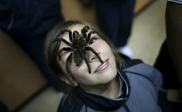 Arachnaphobie (Keystone)