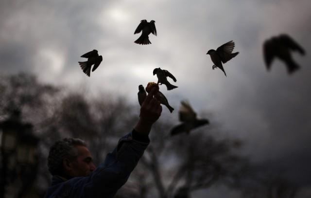 Vögel in Paris (Keystone)