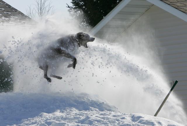 Hund im Schnee (Keystone)