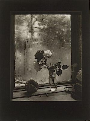 Josef Sudek: The Last Rose, from the Rose series, 1956, © Museum of Decorative Arts in Prague