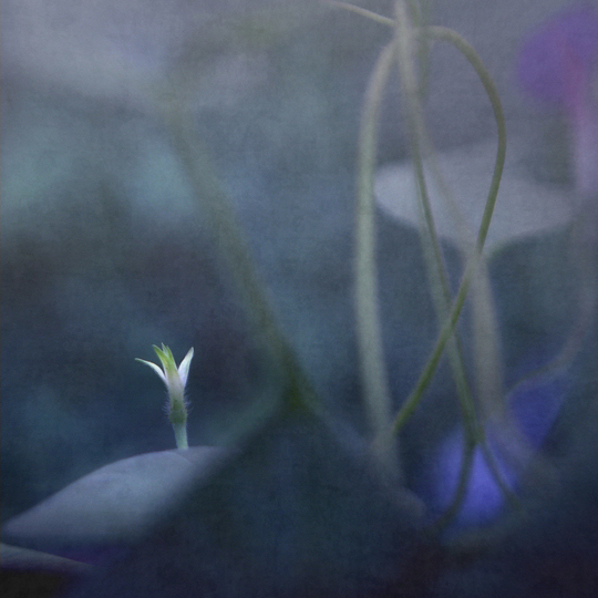 Alone in the Blue (© Magdalena Wanli)