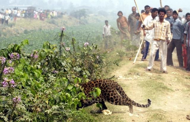 Leopard in Indien (Keystone)