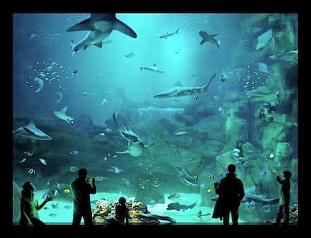 © Lukas Roth: Ohne Titel (Aquarium), 2007