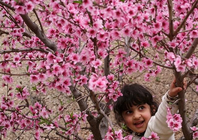 Palästinensermädchen in Kirschblüten (keystone)
